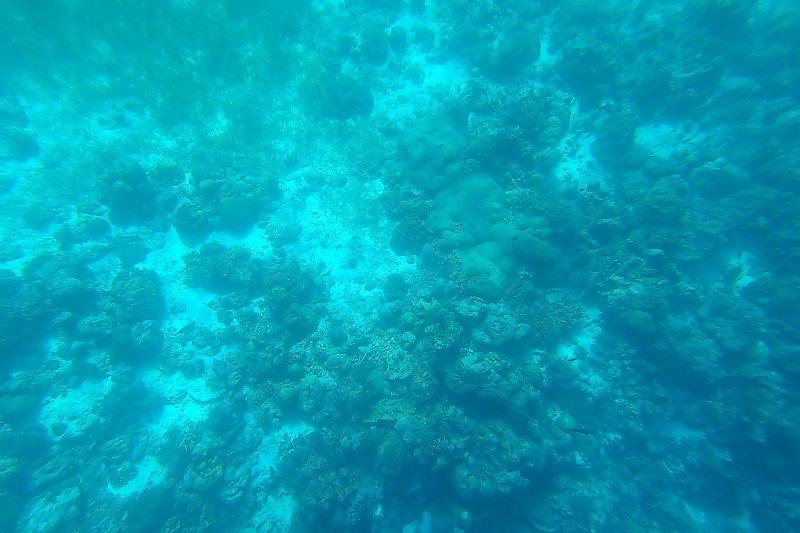 ヒルトゥガン島の水中写真